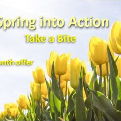 spring into action three month offer