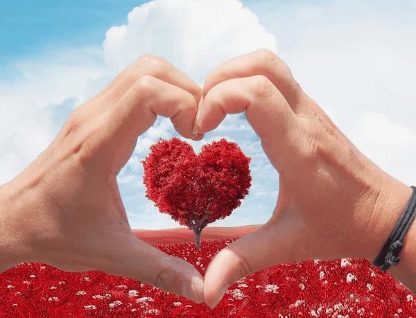heart wellbeing
